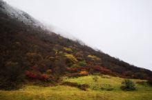 10月的黄龙,一季看三季的景色,山顶白雪皑皑,峡谷之间云雾缭潦,五彩池翡翠晶透,树叶红黄绿争奇斗艳,