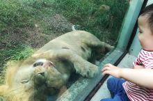 温州动物园,几乎每年都去一次,小家伙真是不会腻啊,现在家里老二也来了,更是要1年1次了,44路公交车