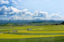 门源,祁连山下面的富裕之地。每年七月中旬油菜花盛开,从仙米沿着大通河往上游驱车,一路都是绚烂景色,尤