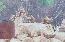 秦岭动物园