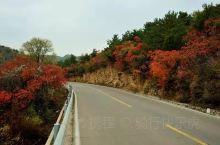 骑行山西观赏红叶