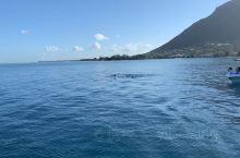 毛里求斯海豚湾快艇看海豚,运气很好,看到很多海豚。。