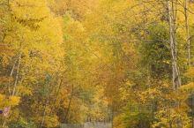 在最黄最美的秋季,释放本我,摄出最美!