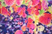 秋天的风采