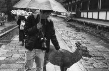 【去奈良看萌萌哒小鹿】 亮点特色: 奈良以市区内随处可见的小鹿而闻名,主要集中在奈良公园,游客可以自