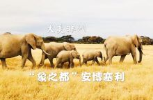 """【大美非洲】(第十期)""""🐘象之都""""安博塞利国家公园  ✈️经过二十多个小时到达肯尼亚的第一站安博塞利"""