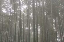 蜀南竹海比我想象中的还要漂亮,一会雾一会晴,飘飘如仙,翡翠长廊名不虚传,我们去的时候还巧遇中央二台的