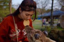 """日本奈良若草山 私藏的""""小鹿乱撞""""攻略  奈良小鹿 很多人来到奈良都会选择来看看这些调皮的小鹿,一般"""