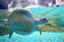 一提到海洋馆,你一定会想起那蔚蓝的海水和海底世界里五彩缤纷的海鱼。过去西北西宁小朋友要想看到这些美丽