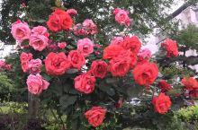 四季都开的花,实在太美了