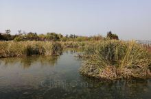 少海湿地公园 少海湿地公园