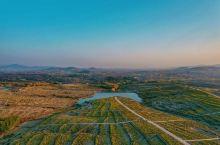"""菊花是中国传统名花之一,花中四君子中就有它的位置,深得人们的喜爱。陶渊明一句""""采菊东篱下,悠然见南山"""