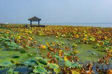 每到秋天,除了色彩斑斓的秋色以外,最令人期待的,就是肥美的大闸蟹了。而说到大闸蟹,必然会想到阳澄湖,