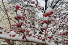 初雪到燕郊!到处花枝翘!!