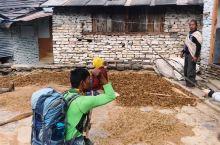 #ABC途中#去Pooh Hills一路都是山村小道,顺便参加一下尼泊尔秋收活动,这边的粗粮都是靠一