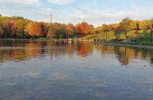 秋天的色彩 加拿大蒙特利尔,皇家山公园 蓝色的天空,白色的云朵,在湖面上留下倒影。 俏皮的松鼠,飞翔