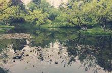 柳浪闻莺,最美的时光 柳浪闻莺景区就在酒店的附近,各种植被非常的茂盛,仿佛到了天然的氧吧,在这里找一