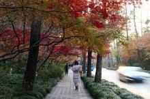 冬季杭州!最美的一条路,九里松,没有之一。超级推荐来杭州的朋友来走一走。