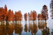 """打卡网红秘境,余姚四明湖水杉林  古有""""浙东明珠""""之称的余姚四明湖,环湖皆山,七十二峰远近翠黛相间,"""