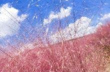 这次是十月份去江宁矿坑公园看粉黛子的,一直忘了发,天很蓝,云很白,那个少年很年轻
