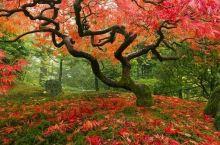 美丽的红叶