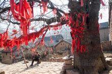 大槐树庇护的古村庄         在䂊西渑池有个赵沟村,之所以能够登上国家级传统村落荣誉榜,因为村