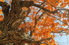 秋天的色彩,保定阜平县
