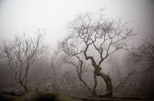 大雾之中游天门山 天门山位于湖北省天门市,从张家界武陵源门票站开车1小时就到了。 这天赶上特大雾,啥