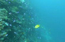 【娱乐体验攻略】 fun diving,疫情期间,我们航班停飞,30米深潜,让我们隔离在海底世界,是