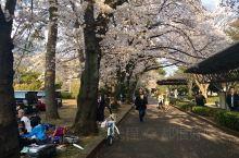 看看日本的樱花和美女