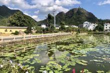 一场突如其来的台风破灭了从神仙居去温岭的计划,却邂逅了一个风景优美、宁静致远的小村庄-塔后村!村子坐