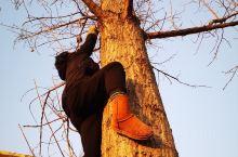 冬天的树就是巨人的神经系统