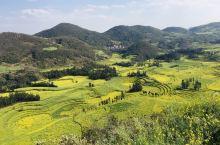 """油菜花盛开时的云南罗平,成了真正的""""金玉满堂""""之乡,漫山遍野的油菜花铺天卷地,生命的魅力和旺盛的气息"""
