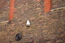 伦敦 苏荷区的鼻子 Soho的七个鼻子是设置在建筑物上的艺术装置。它们是由艺术家在1997年放置的,