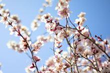 人间四月芳菲尽,山寺桃花始盛开。 在家里呆的太久,初见桃花盛开,满眼惊喜,有着春天的气息,相信会像桃