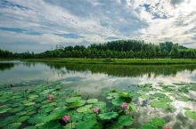 金沙湾以打造全国休闲农业与乡村旅游示范点为发展目标,以建设古朴中心村、生态示范村、赏荷特色村、乡村旅