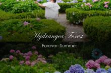 共青森林公园八仙花展,魔都赏花攻略