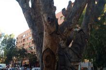 俯瞰马拉喀什,路边的树