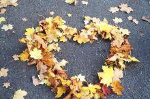 Hove Park是一个不错的公园,在秋天更值得一去拍拍落叶,还有一个像指纹形状的小maze,,有些