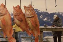 鲜鱼之乡荷兰-来自北海的味道,餐厅自行捕捞和熏制的海味@Franks Smoke House:Hom