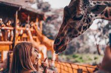 内罗毕 Langata Giraffe Centre 长颈鹿中心  Melvile夫妇于1979年成
