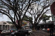 听老人介绍这里是条老街,有大型购物中心,也有很多买各类物品的小店,还有小食档。图五是用酒饼发酵过的木