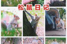 费城有很多广场与公园,常常可见可爱的小松鼠,但是松鼠非常警觉,跑得也非常快,能够近距离拍摄松鼠非常不