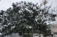 久违的到来!记得已经多少年没有见过这样的雪景了吗?