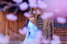 最粉的浪漫尽在无锡鼋头渚 3月带走了冬日严寒,又到了一年四季最舒服的季节,温暖的春风吹拂着江南,作为