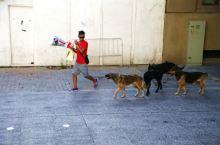 圣地亚哥街头风情_02 街头野狗很多,常成群结队,不过大多很干净文明,并不惹人烦。 图1这厮吃早饭炫
