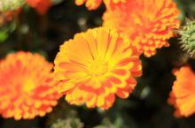 春天,是拍花的季节。此次目的地是会理古城,但看到花后,禁不住留下脚步。