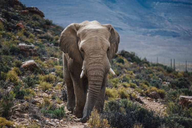 Aquila Private Game Reserve - Day Trip Safari3