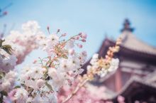 春风吹绿了垂柳,粉色的花瓣亲吻你的额头; 仰望着明媚的阳光,看着人来人往… 最近天气特别好,而且正直