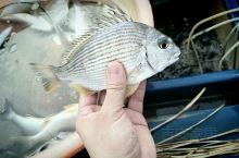 大家猜猜这是什么鱼